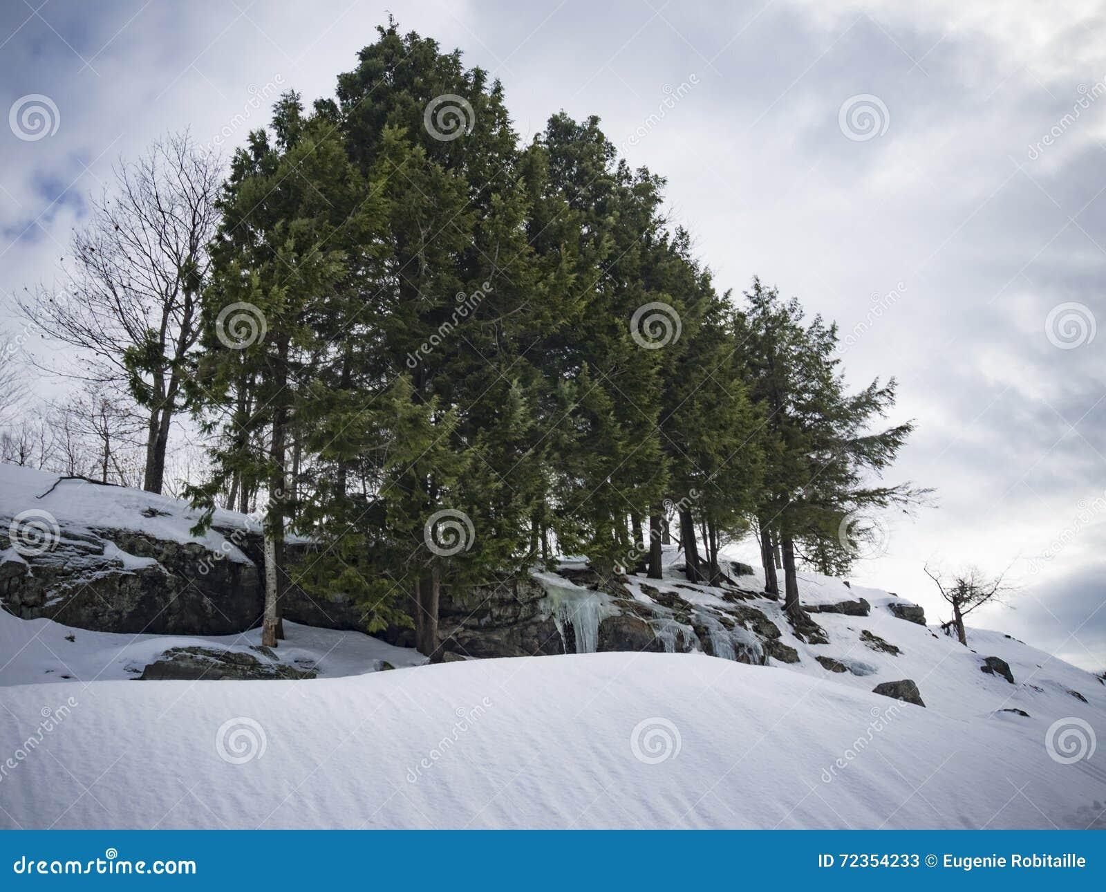 阿尔卑斯包括房子场面小的雪瑞士冬天森林