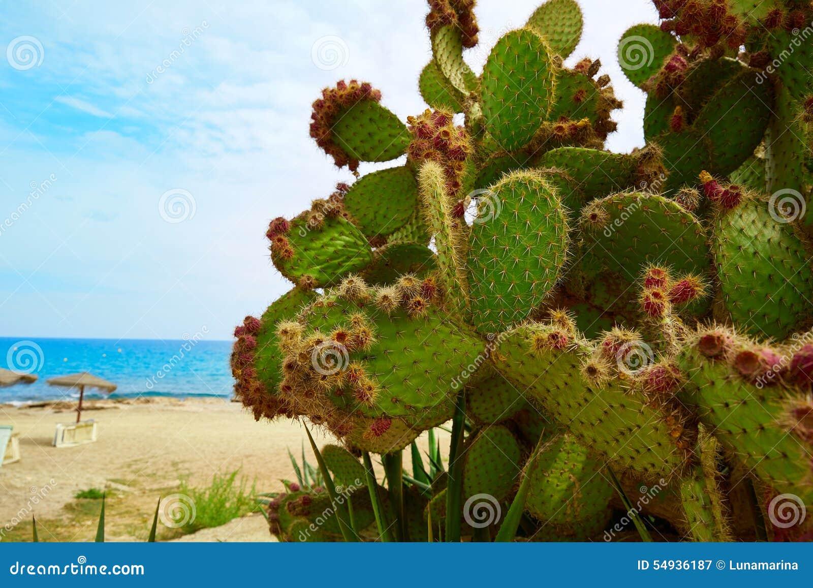 阿尔梅里雅Mojacar海滩地中海西班牙