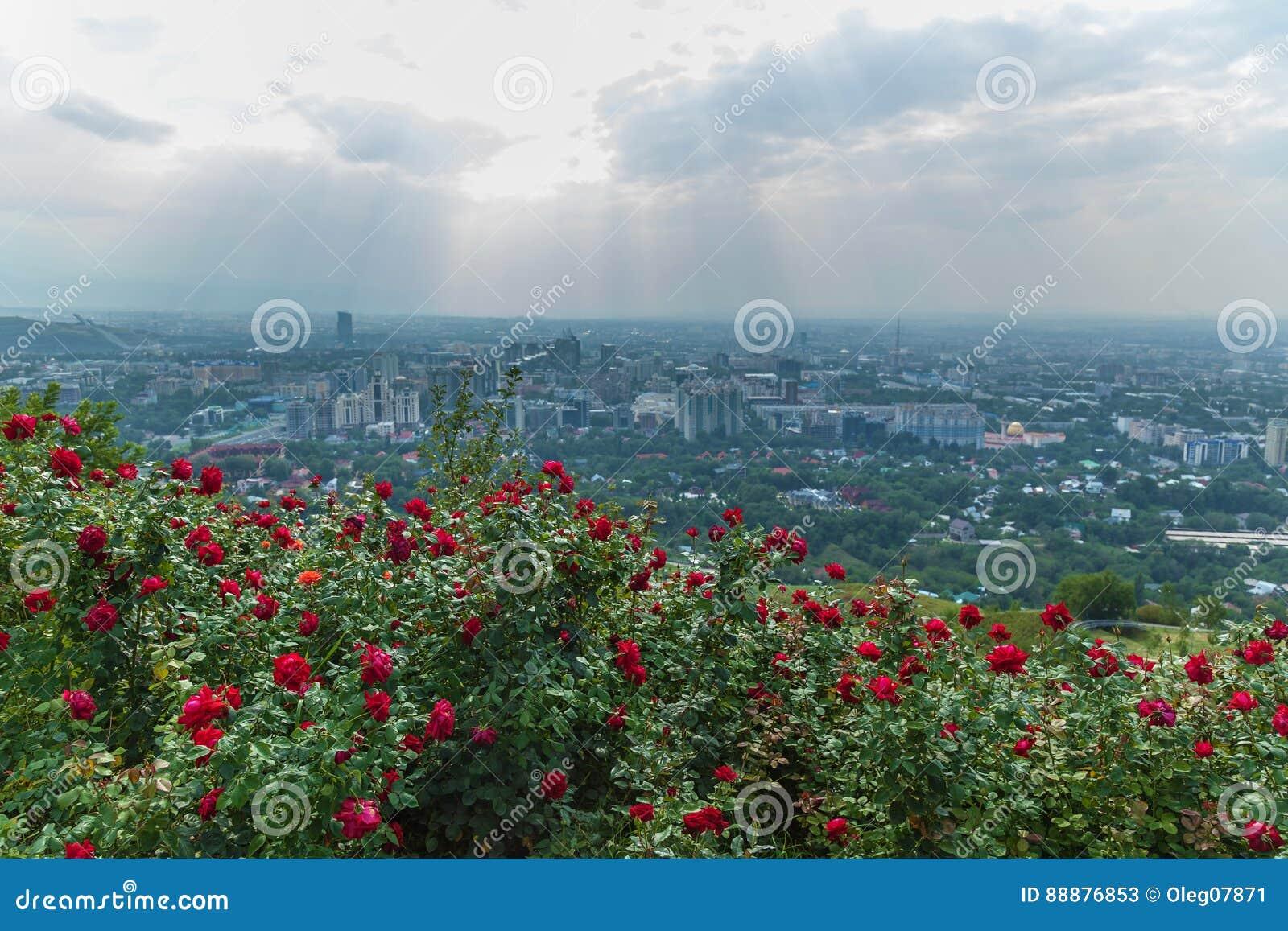 阿尔玛蒂从Koktobe小山的市视图