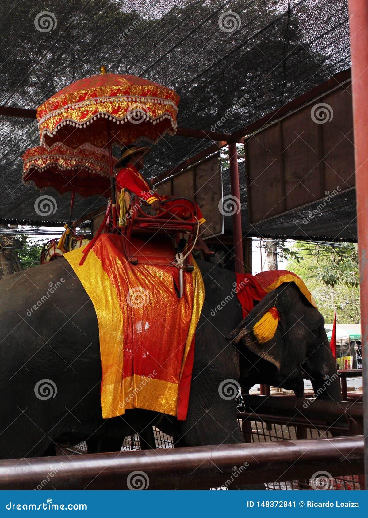 阿尤特拉利夫雷斯,泰国- 2014年4月29日 用于观光旅游的大象