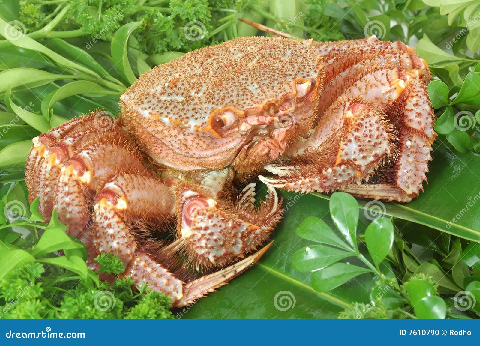 阿拉斯加的螃蟹国王
