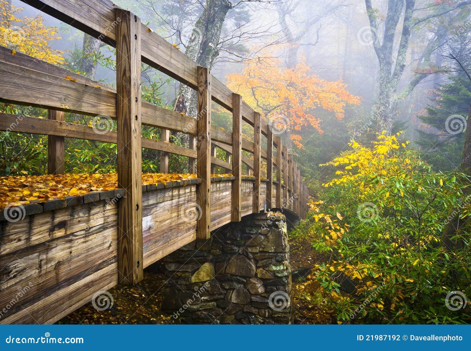 森林杜鹃花季节性卡罗来纳州国家槭树秋天户外绿色橙色五颜六色季节图片