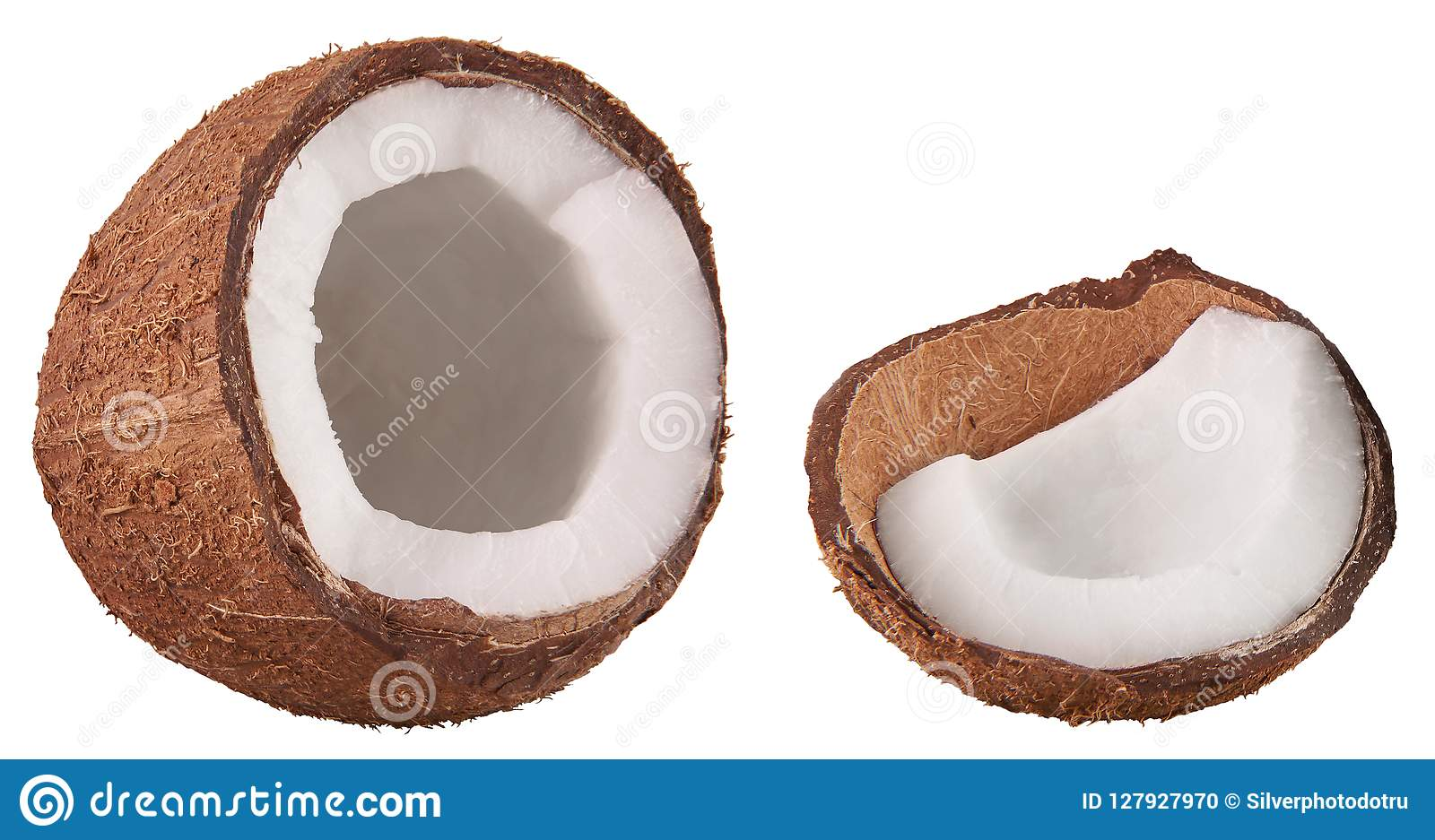 隔绝在白色开放成熟热带椰树坚果果子 用白色骨肉切的椰子 热带食物概念 食物零件和元素