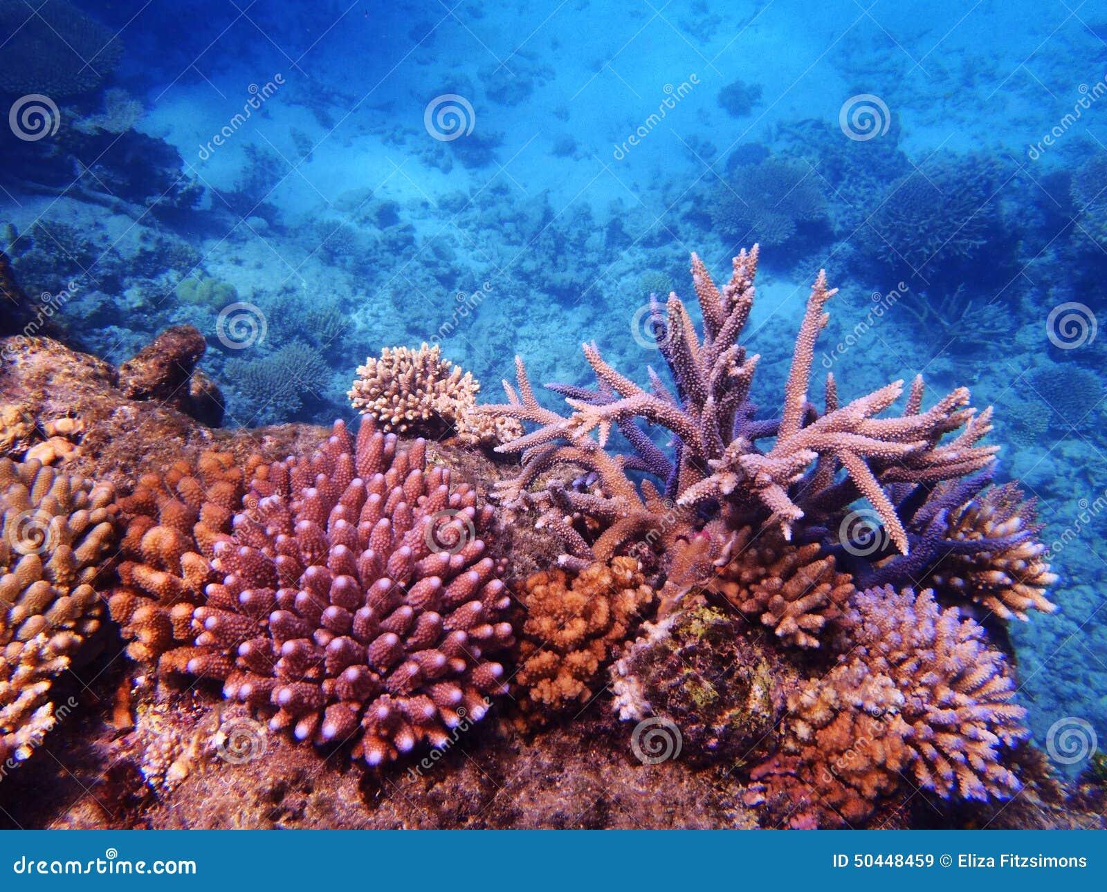 障碍极大的礁石