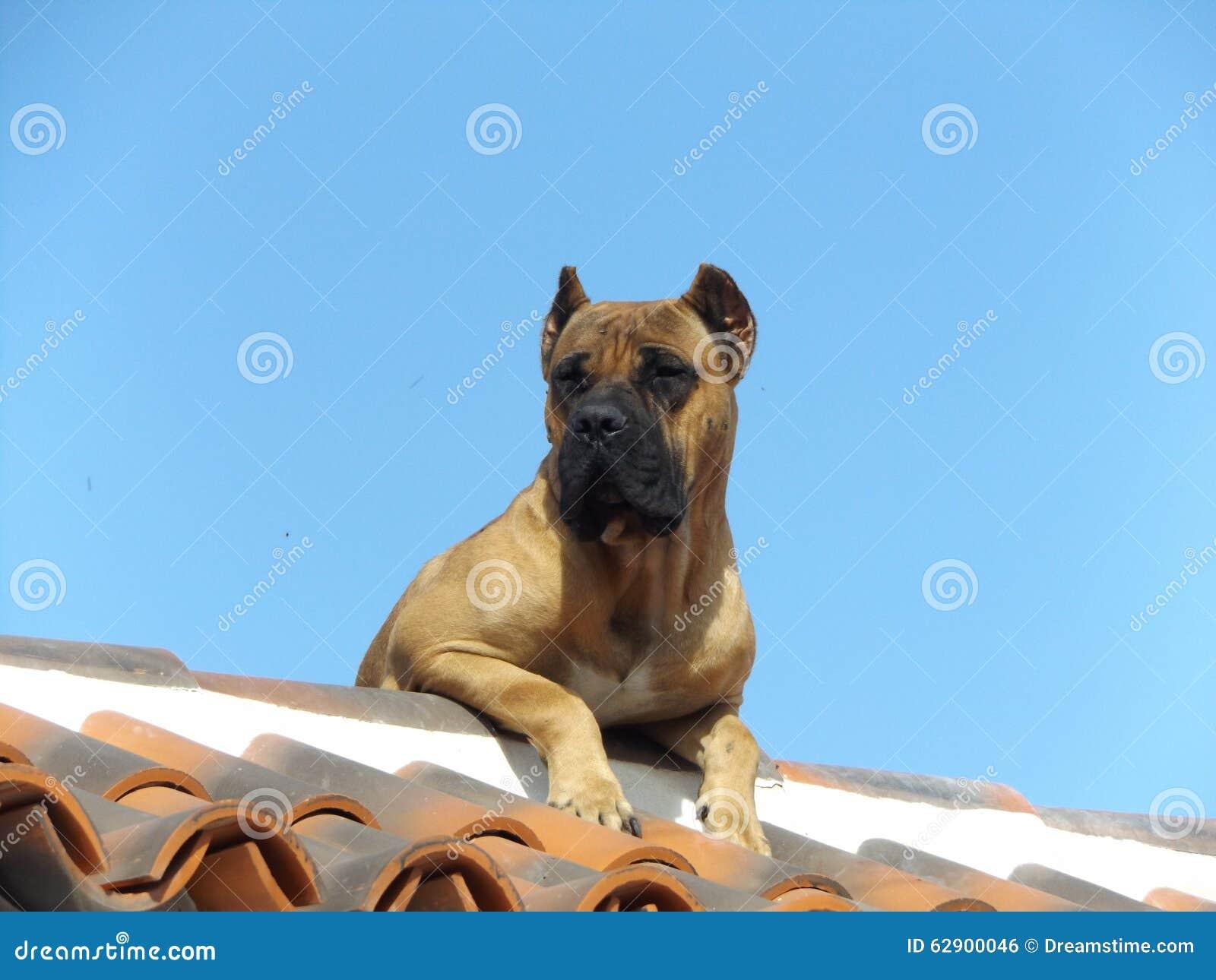 色女和公狗�9��yl#�+_黄雀色狗