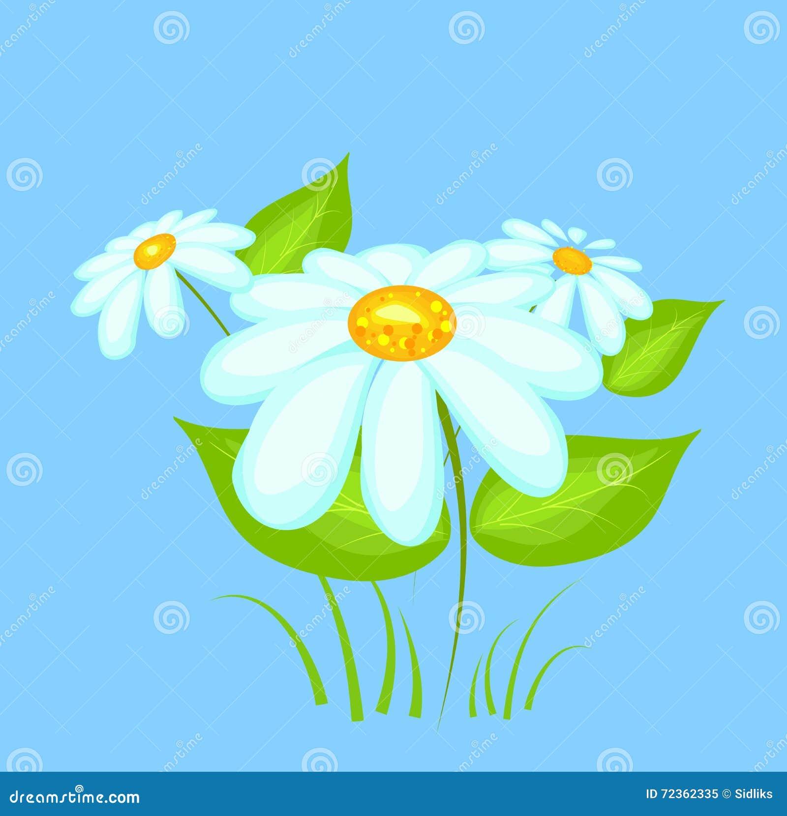 雏菊开花传染媒介