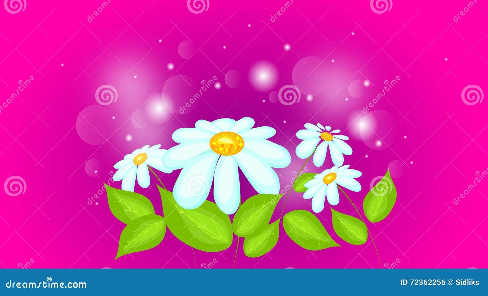 雏菊有发光的背景