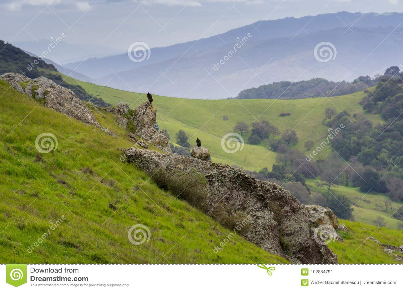 雕坐在一个谷在一个雨天,加利福尼亚的一个岩石