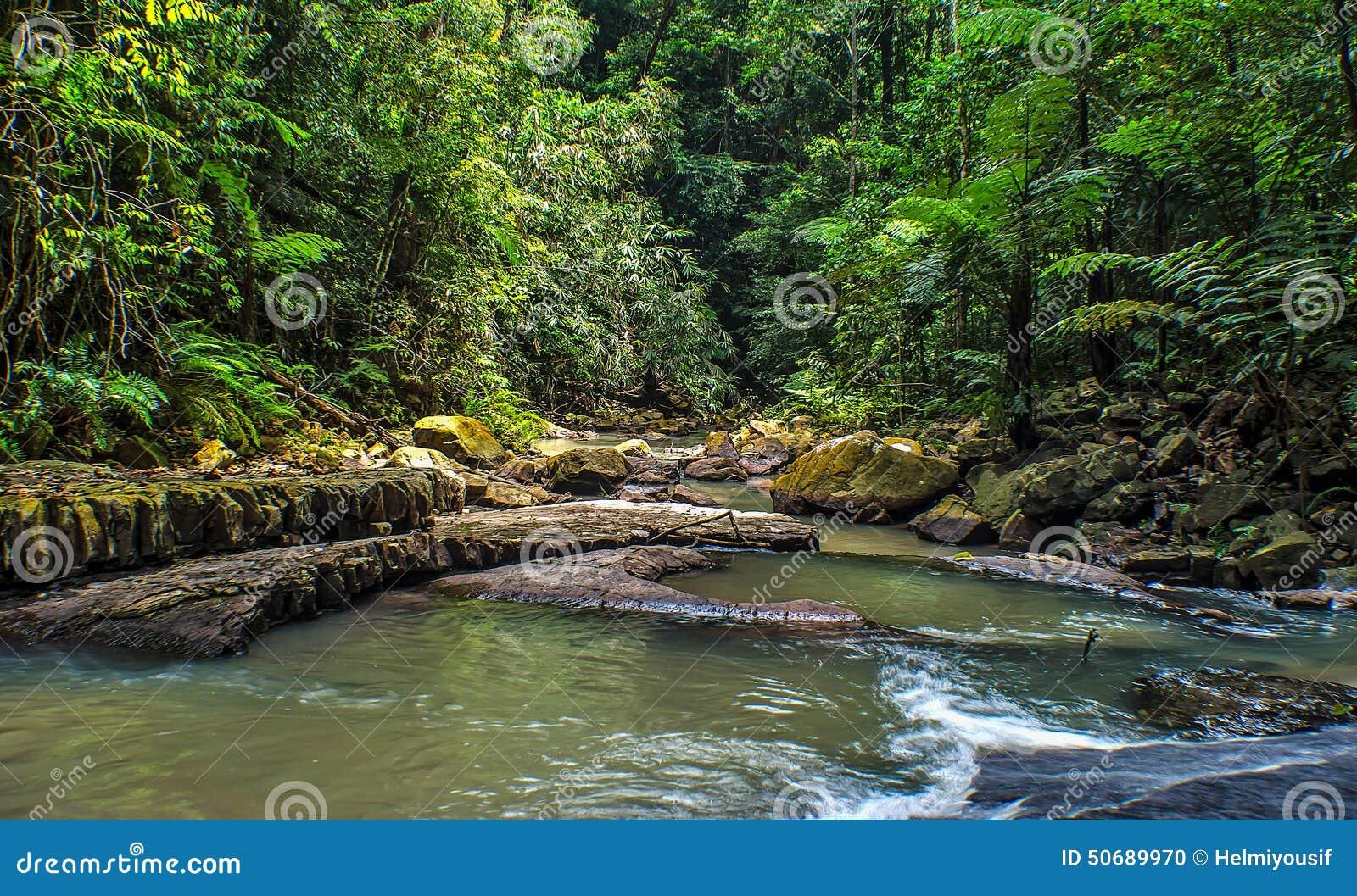 Download 雨林密林 库存照片. 图片 包括有 安排, 绿色, ,并且, 旅行, 彩虹, 艺术, 爱好健美者, 密林 - 50689970