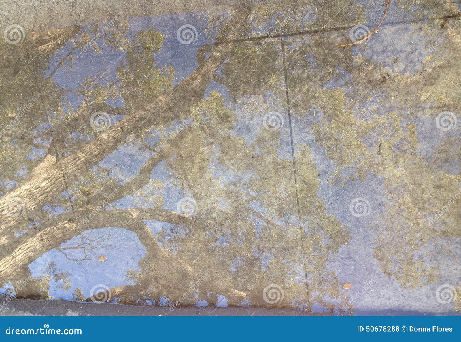 Download 雨水坑反射树 库存照片. 图片 包括有 结构树, browne, 绿色, 镇压, 反射, 边路, 反映, 大麦 - 50678288