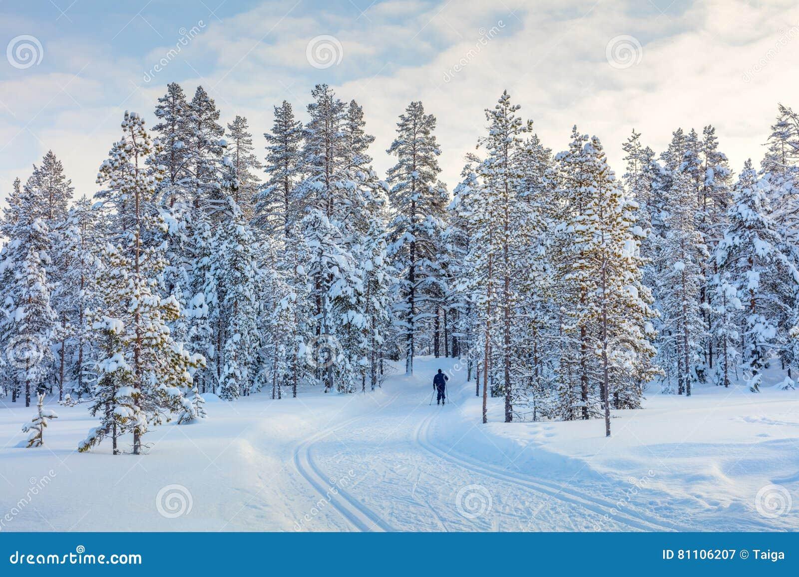 滑雪的足迹在美丽的冬天森林里