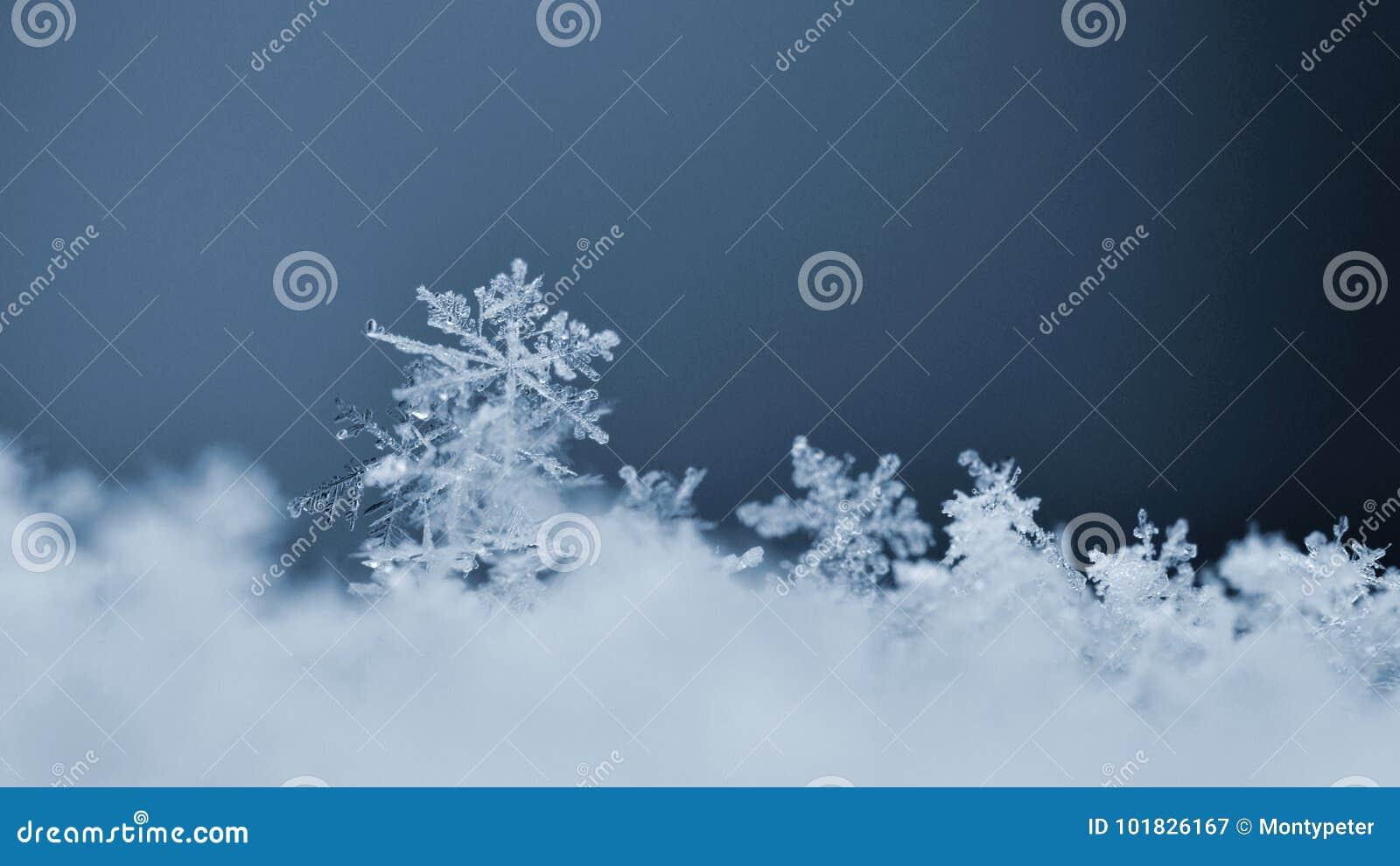 雪花 真正的雪水晶宏观照片  美好的冬天背景季节性自然和天气在冬天