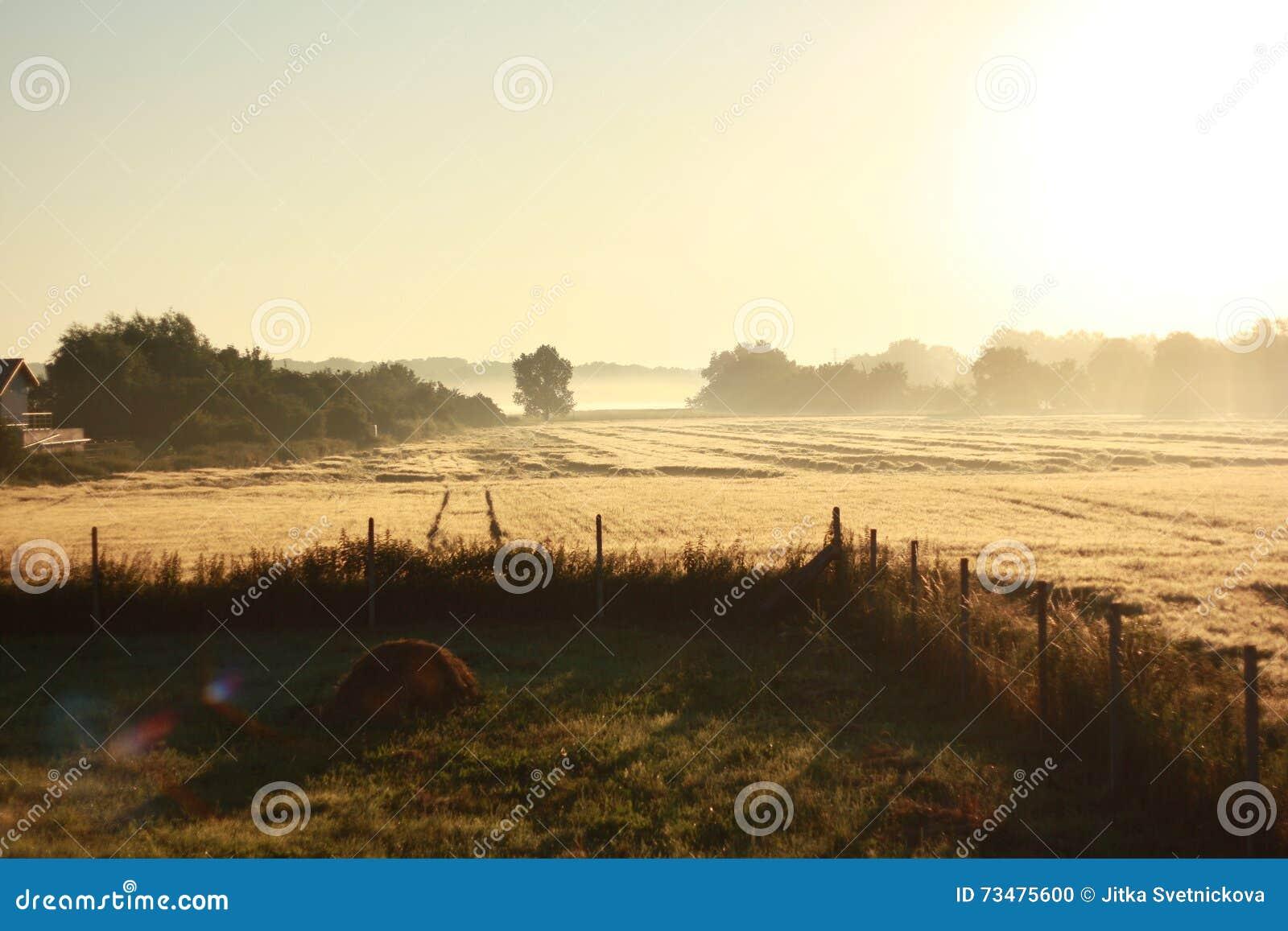 雾在水的草甸早晨