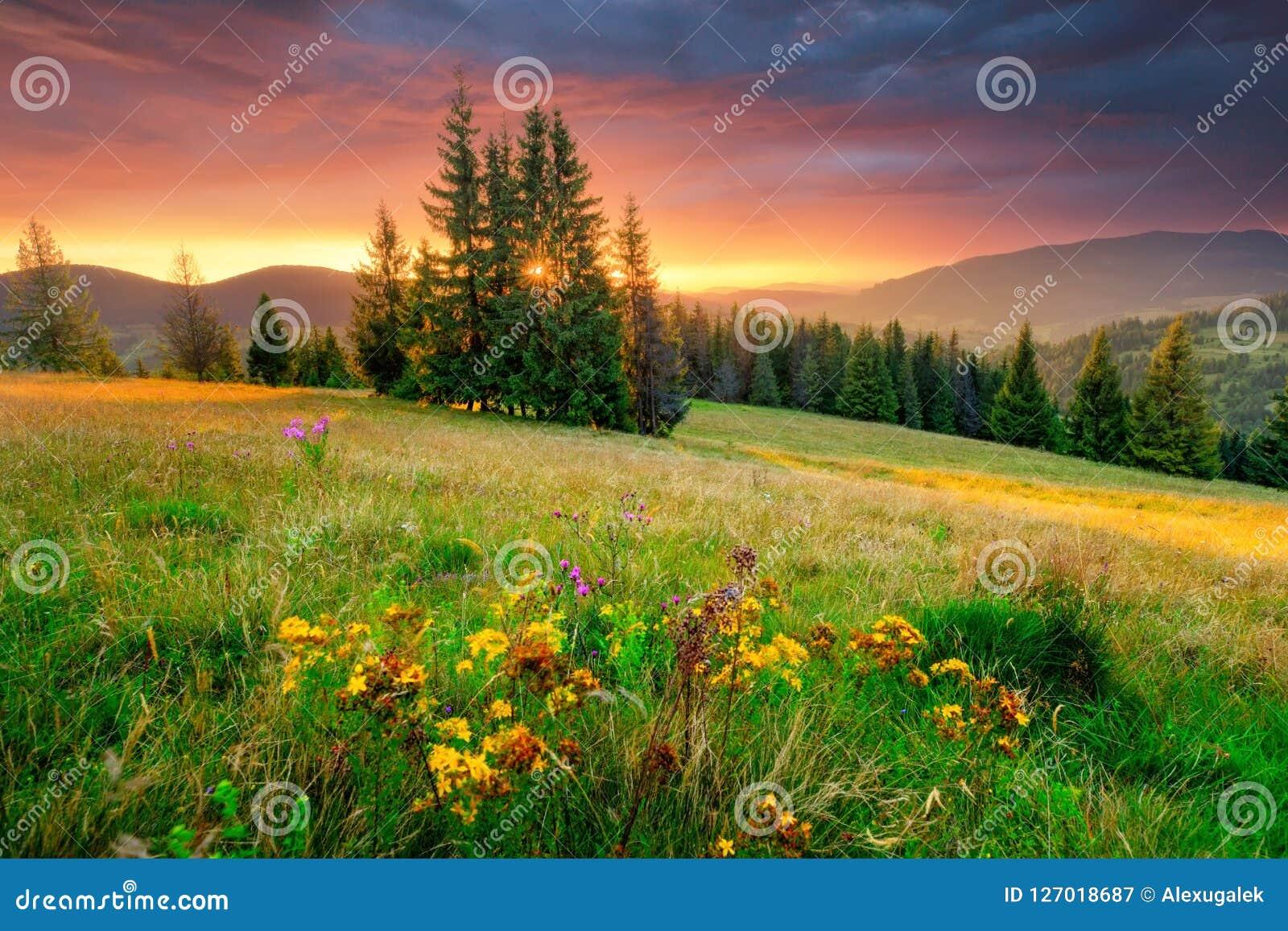 雾房子横向早晨剪影结构树 绿色草甸和五颜六色的天空在日出