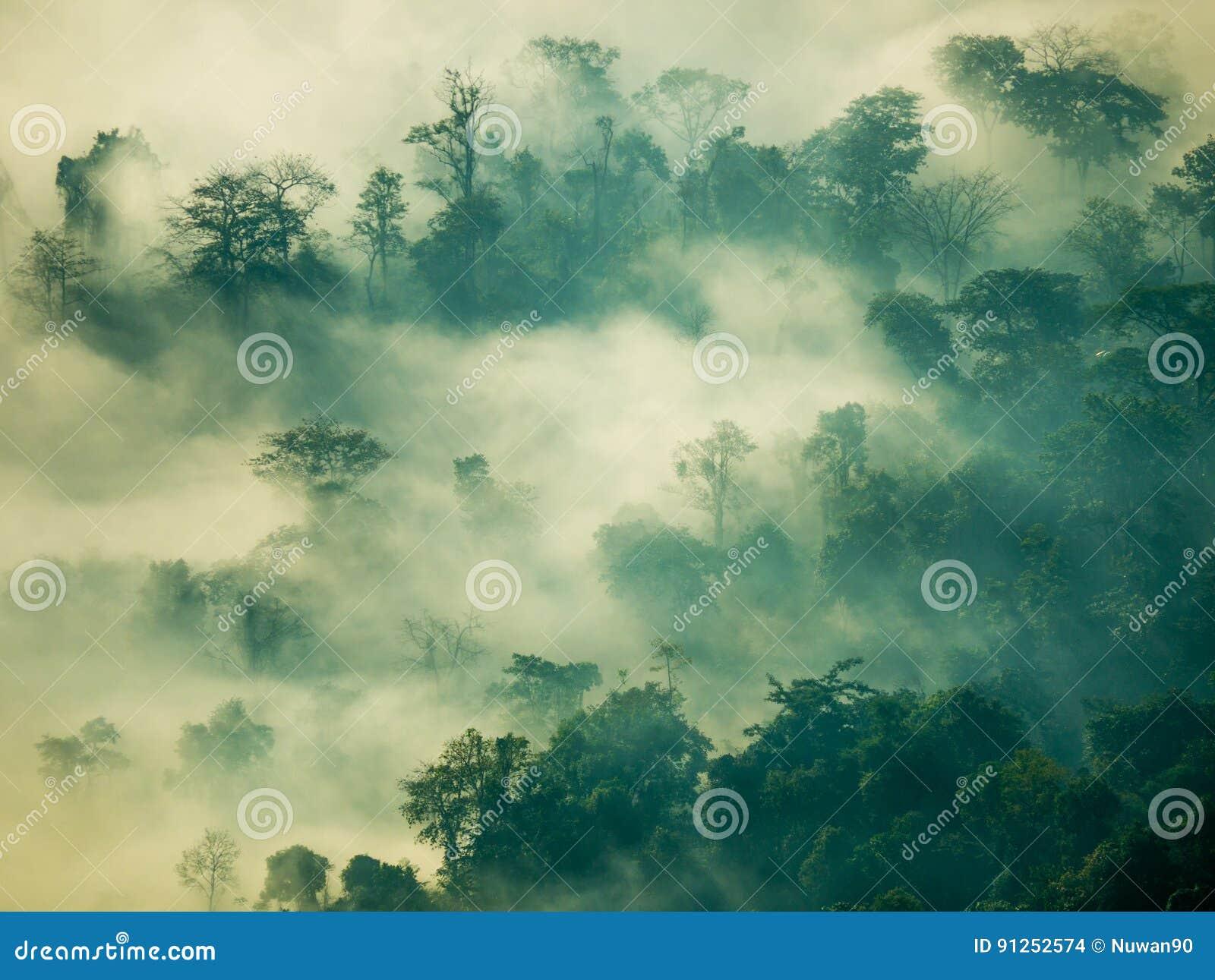 雾神秘主义者在山的森林里