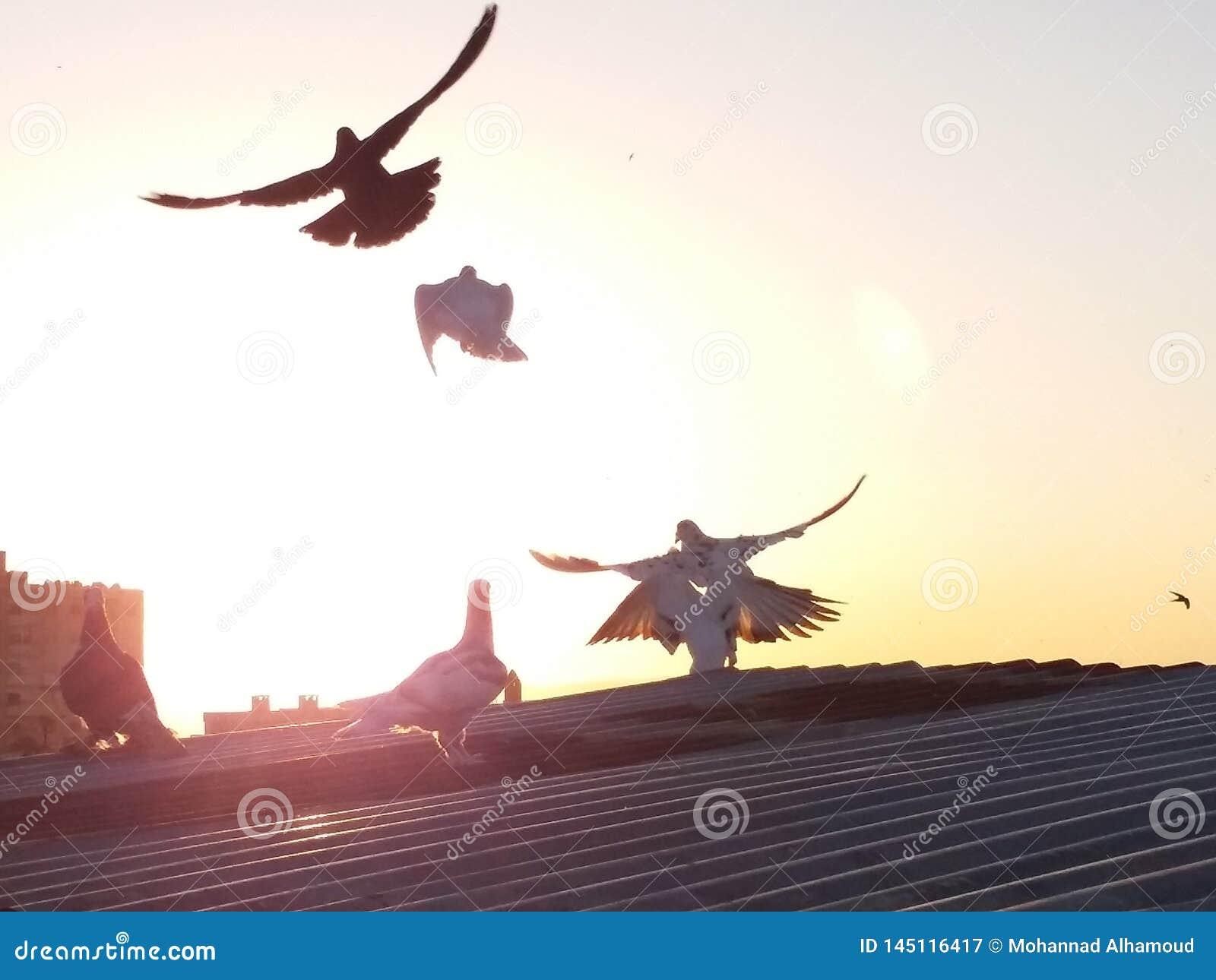 霍姆斯叙利亚鸟