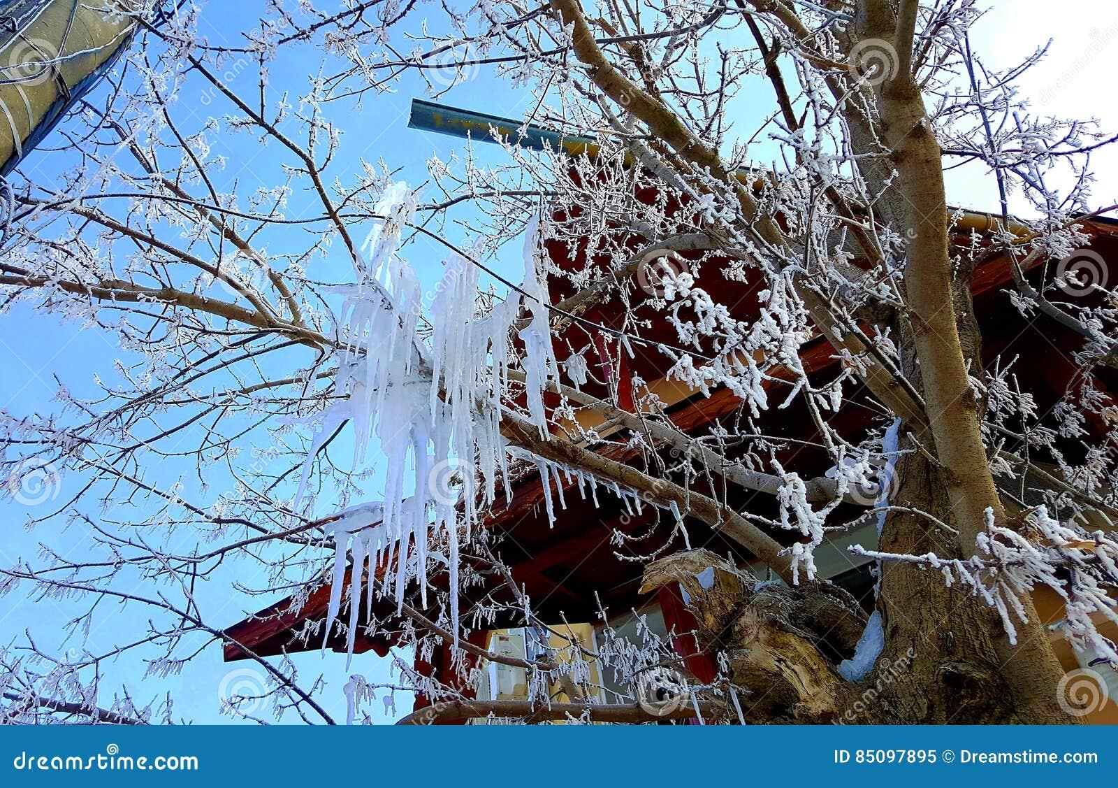 结霜的结构树