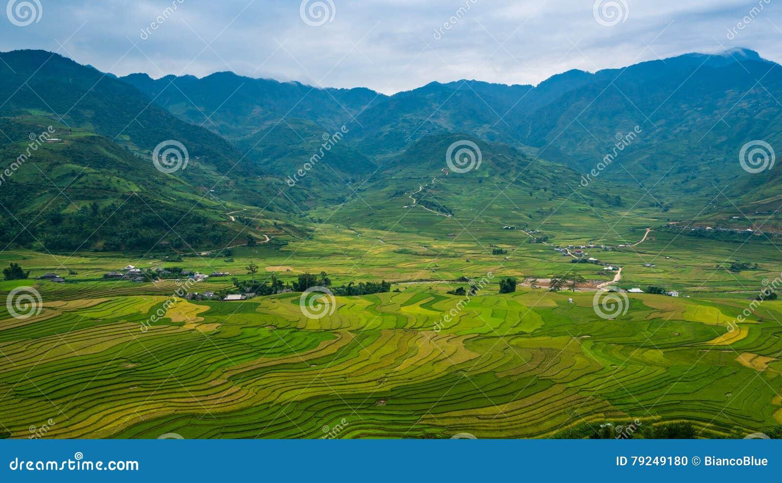 露台的米领域在Mu Cang柴,越南