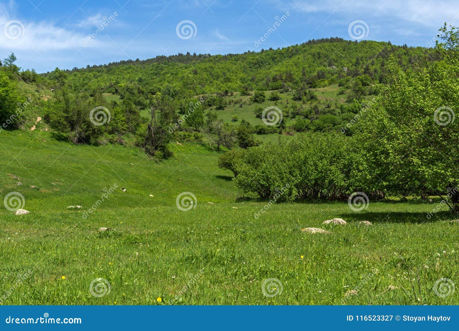 青山春天风景临近Fotinovo村庄在Rhodopes山,保加利亚的