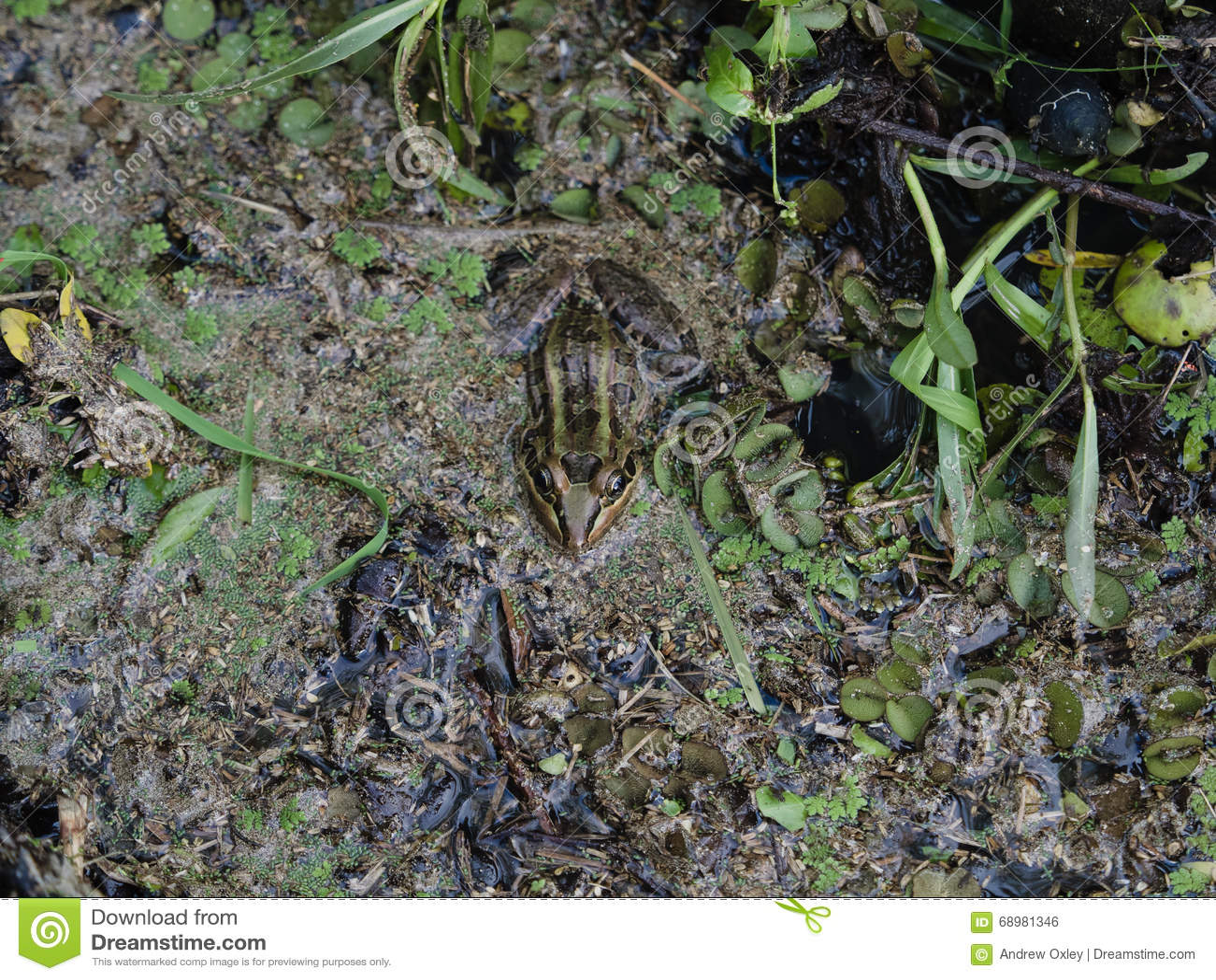 青蛙在池塘
