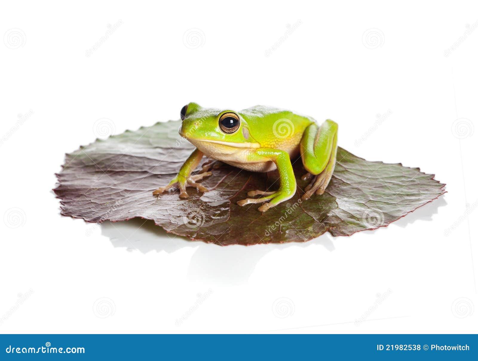青蛙查出的叶子