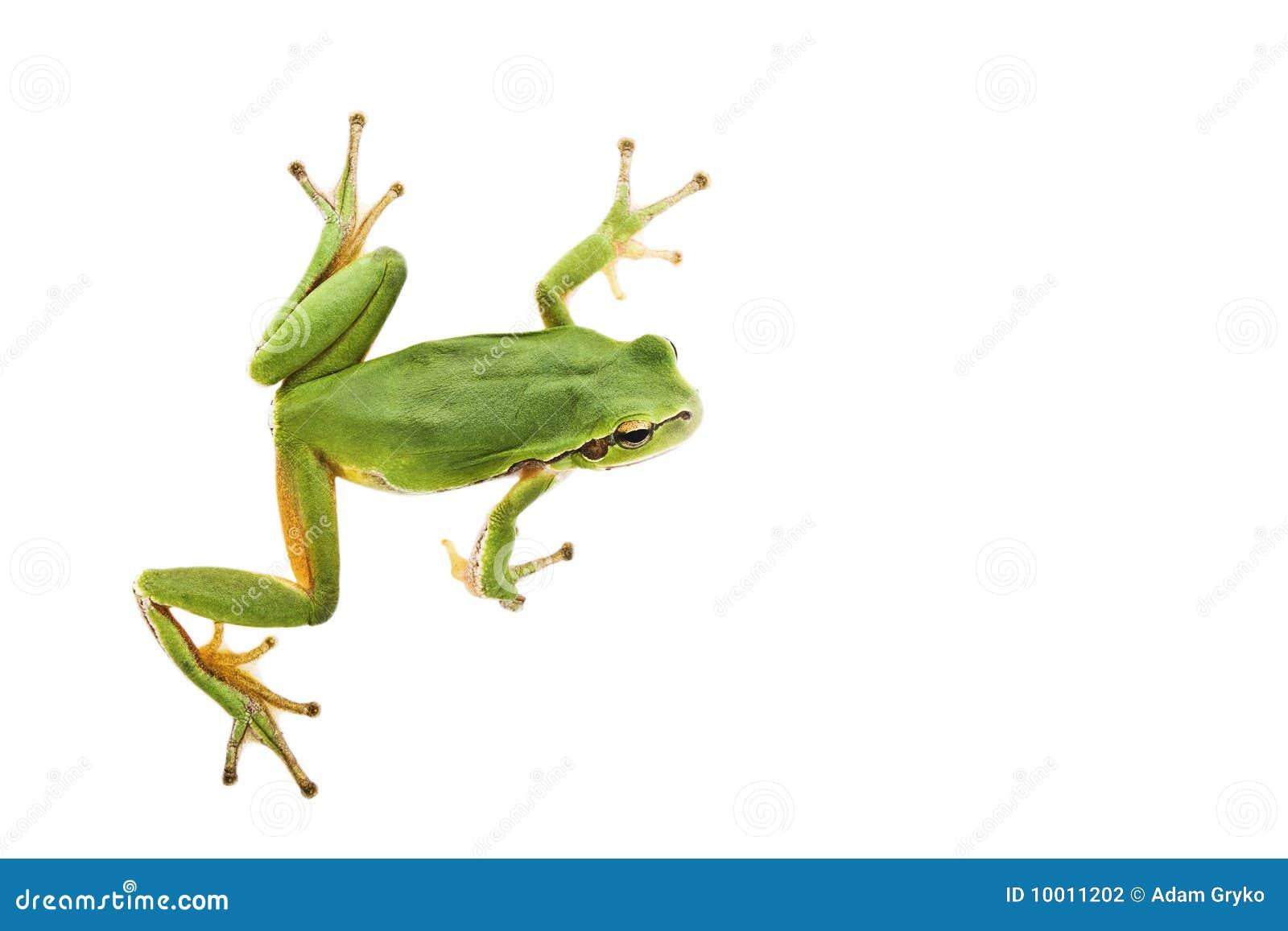 青蛙结构树