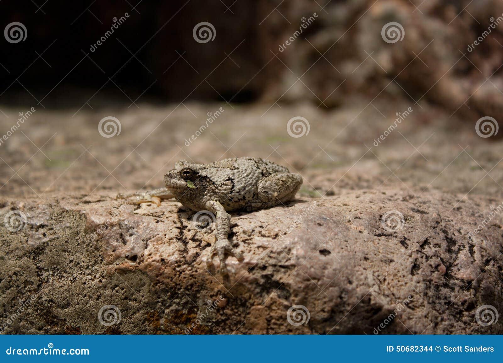 Download 3青蛙 库存照片. 图片 包括有 伪装, 截肢术, 岩石, 蟾蜍, 石头, 青蛙, 冰砾, 本质, 敌意 - 50682344