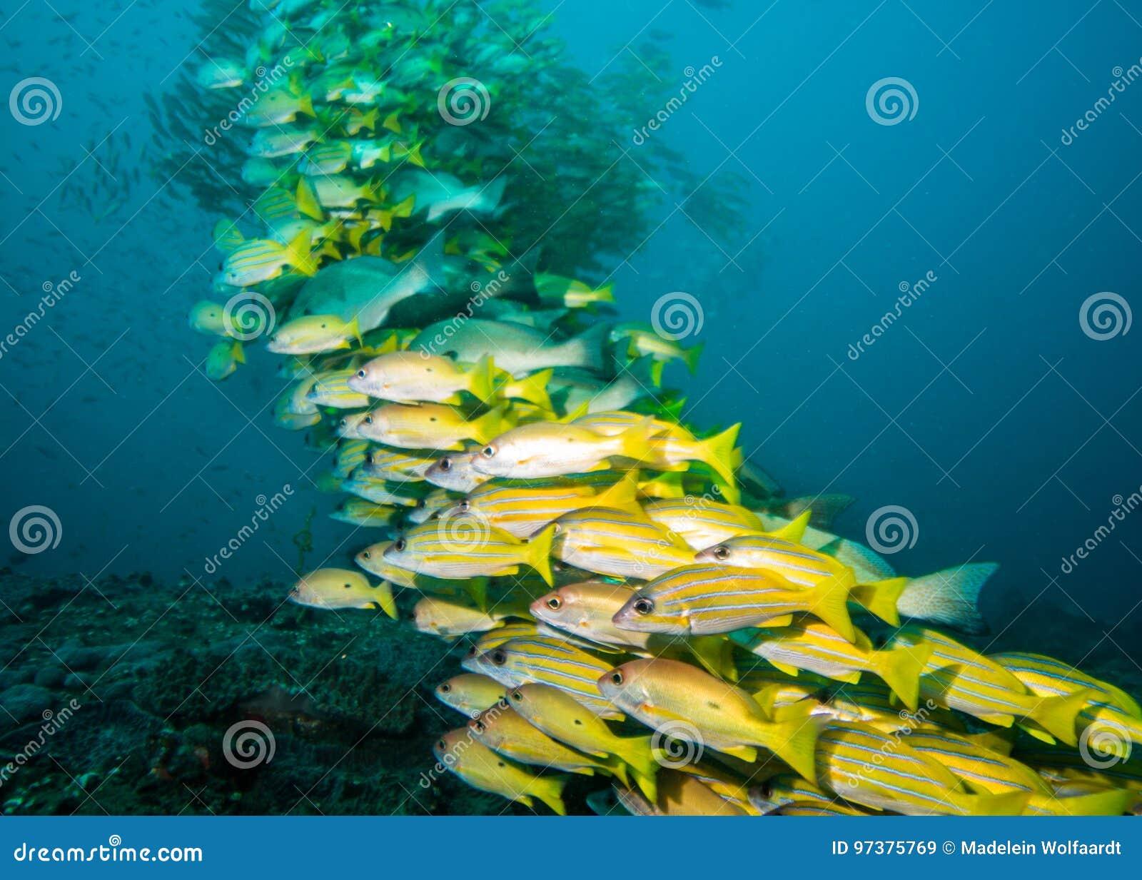 非常攫夺者大学校在礁石的