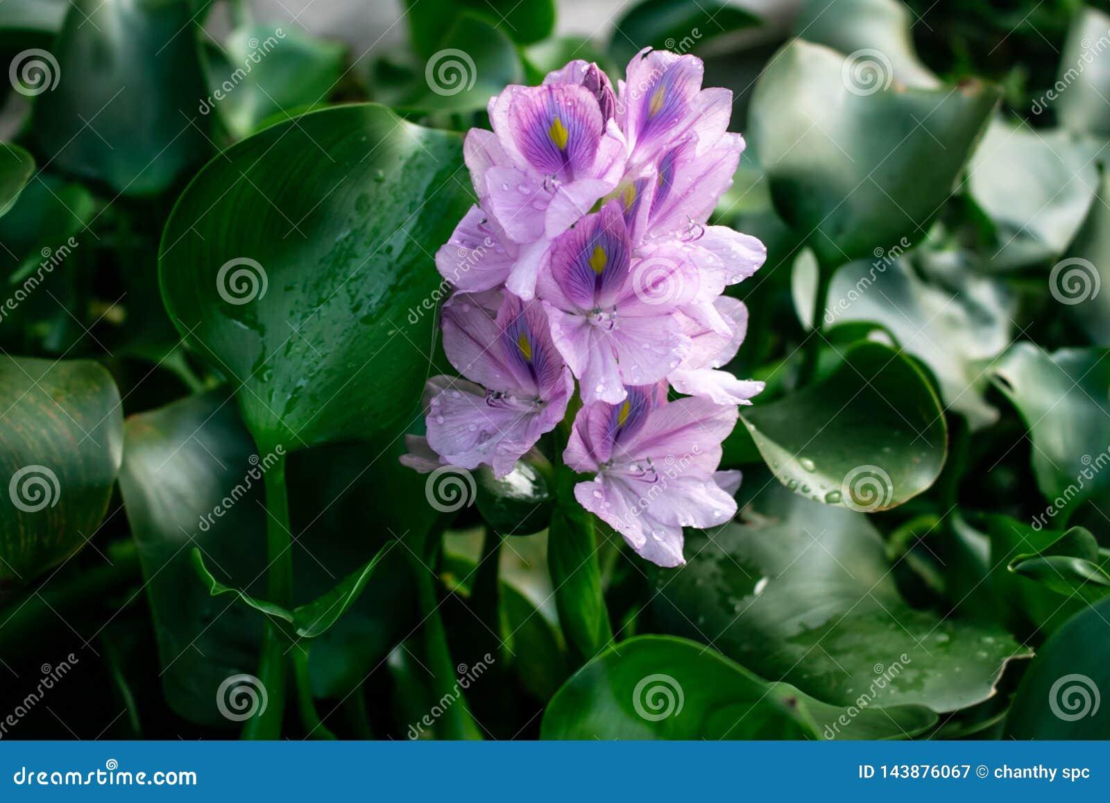 非常美丽被察觉的花