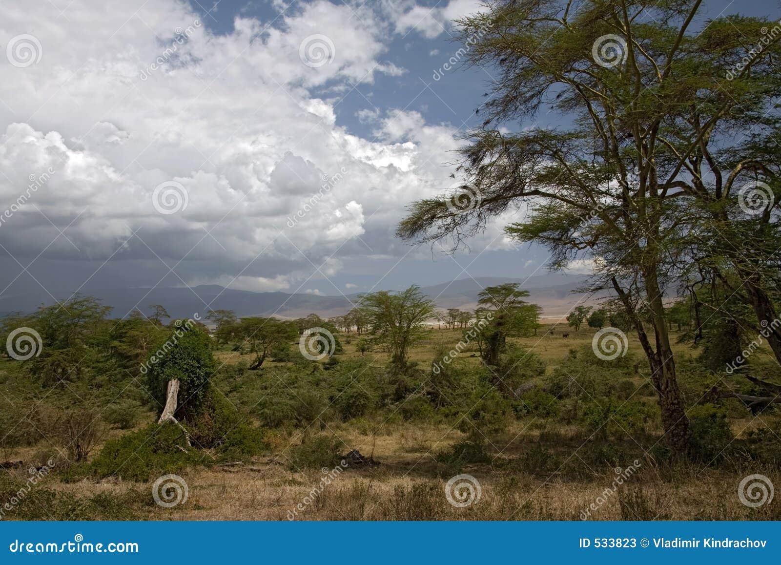 Download 非洲横向ngorongoro 库存图片. 图片 包括有 横向, 有薄雾, 破擦声, 旅途, 闹事, 植物群, 天空 - 533823
