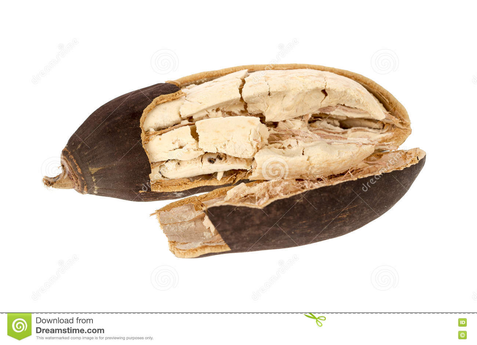 猴面包树果子
