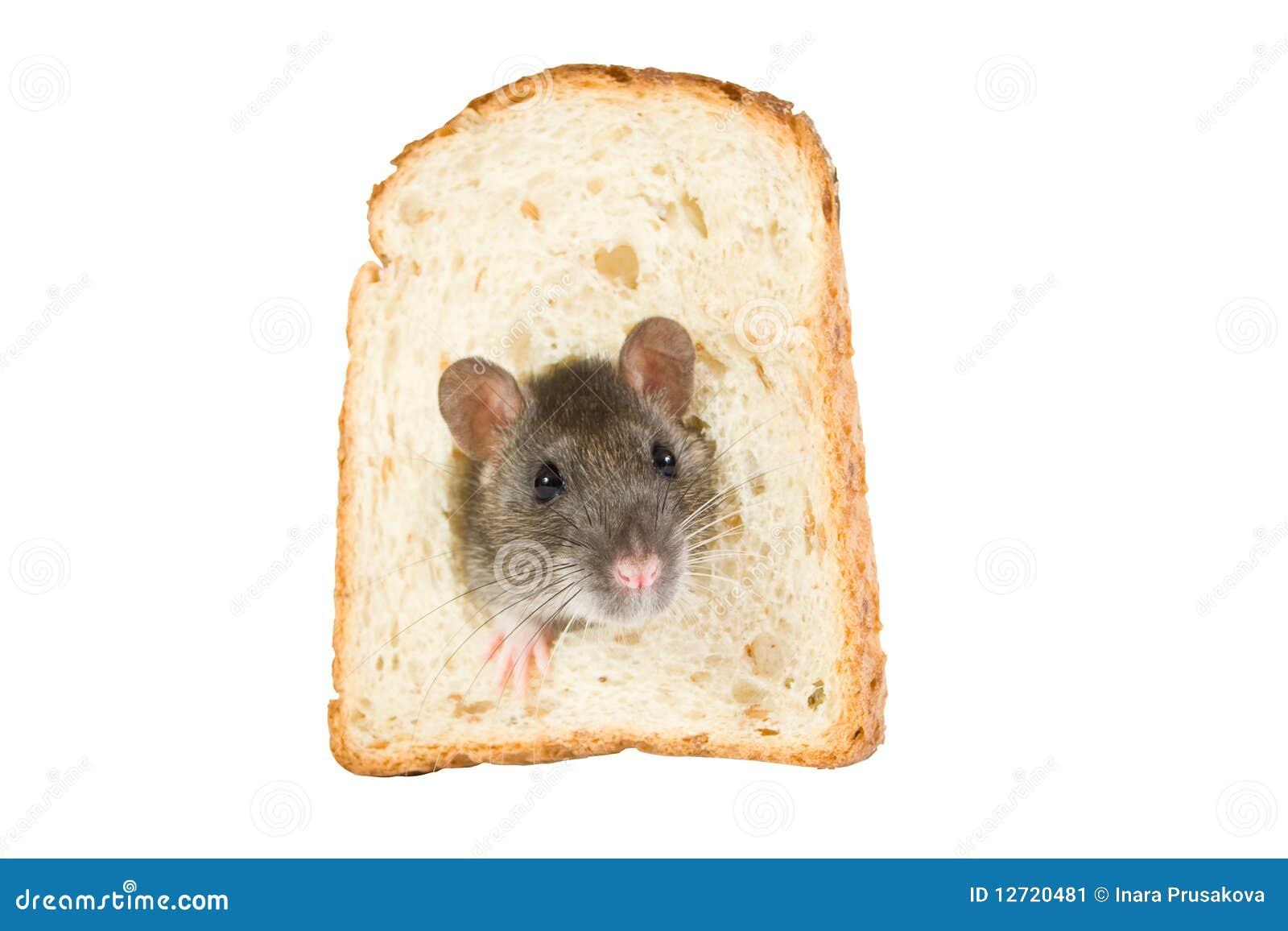 面包漏洞汇率