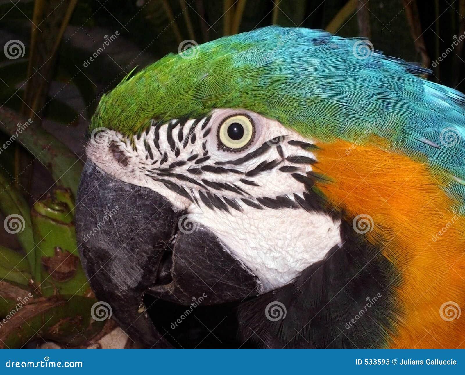 Download 顶头鹦鹉 库存图片. 图片 包括有 颜色, 眼睛, 烧杯, 敌意, 宏指令, 广告牌, 题头, 双翼飞机, 异乎寻常 - 533593