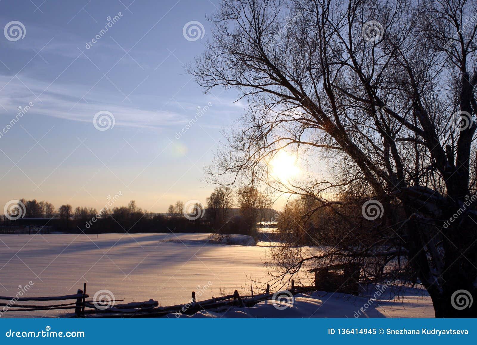 领域、树、冬天和太阳落山在乡下