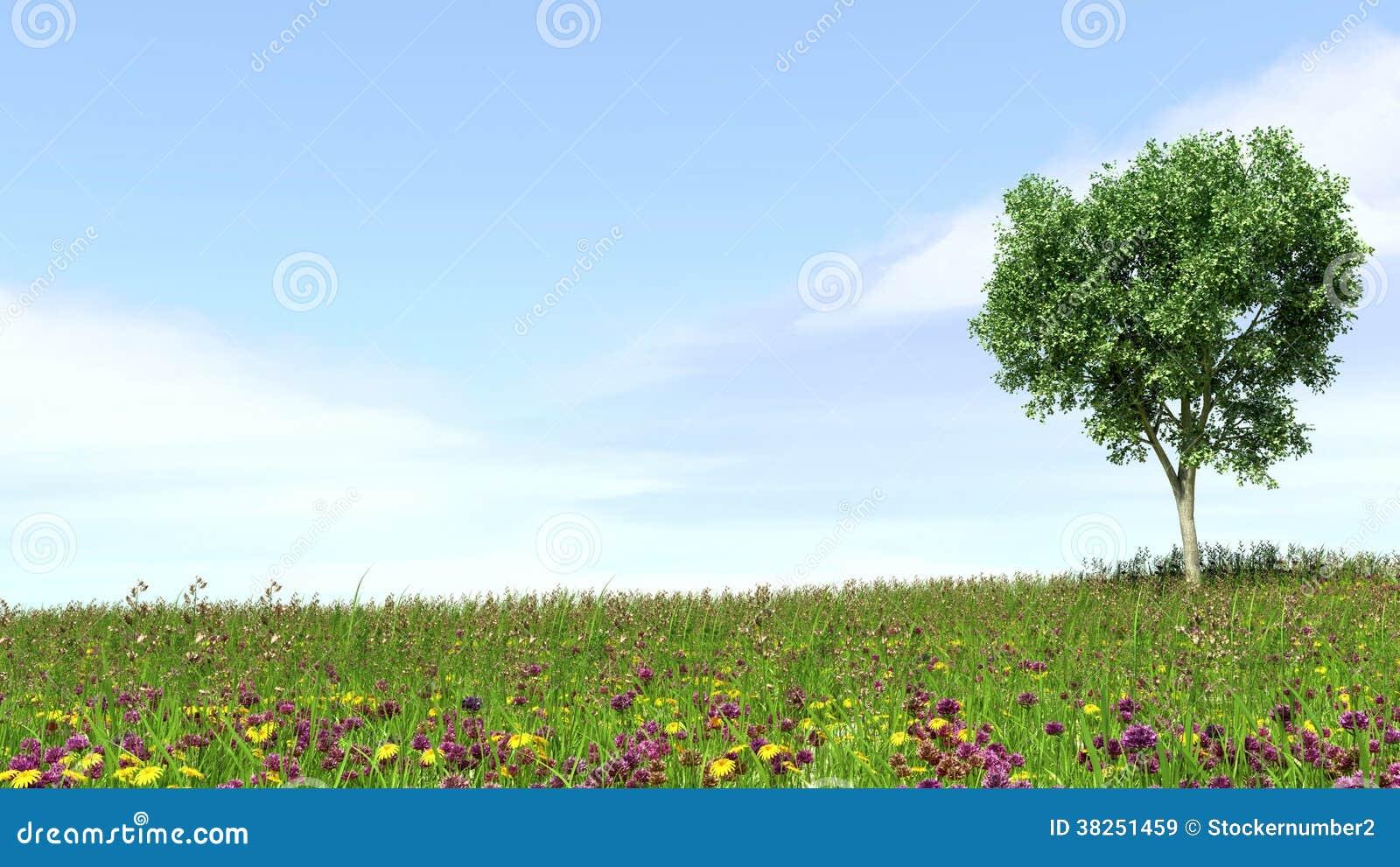 领域、树和蓝天