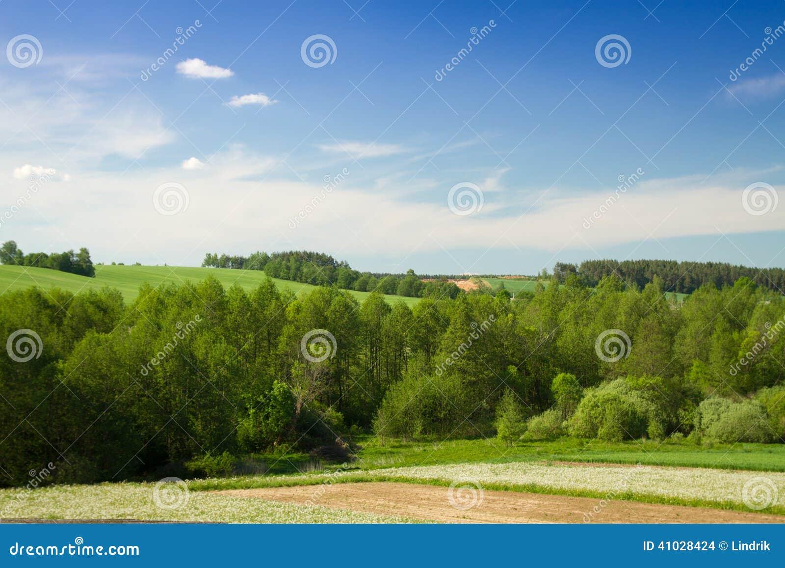 领域和森林夏天风景 美丽如画的风景在欧洲.图片