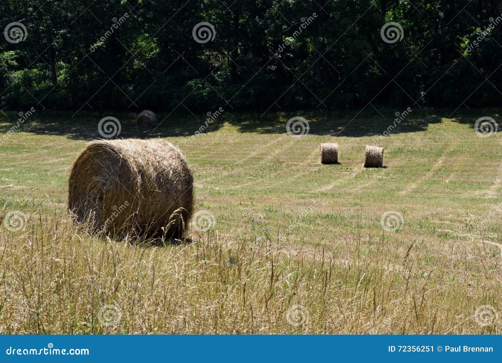领域在农村乔治亚,美国