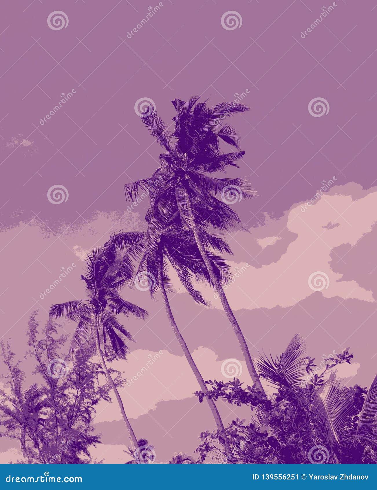 风吹的美丽的棕榈树