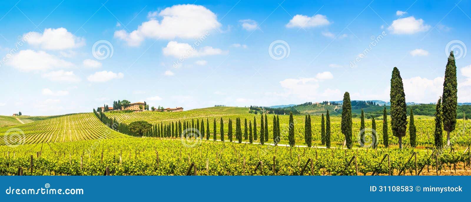 风景托斯卡纳风景全景与葡萄园在Chianti地区,托斯卡纳,意大利的