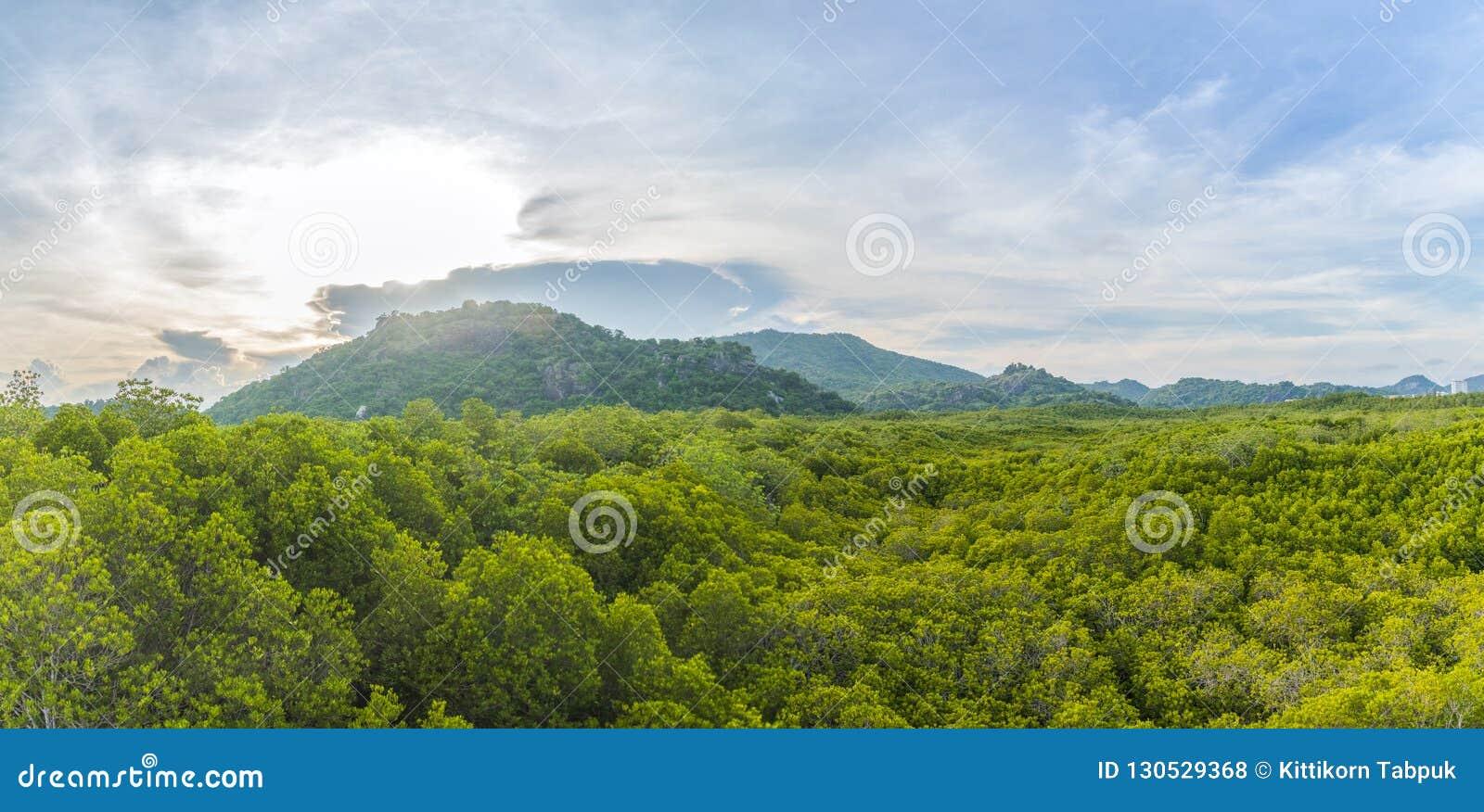 风景树和山
