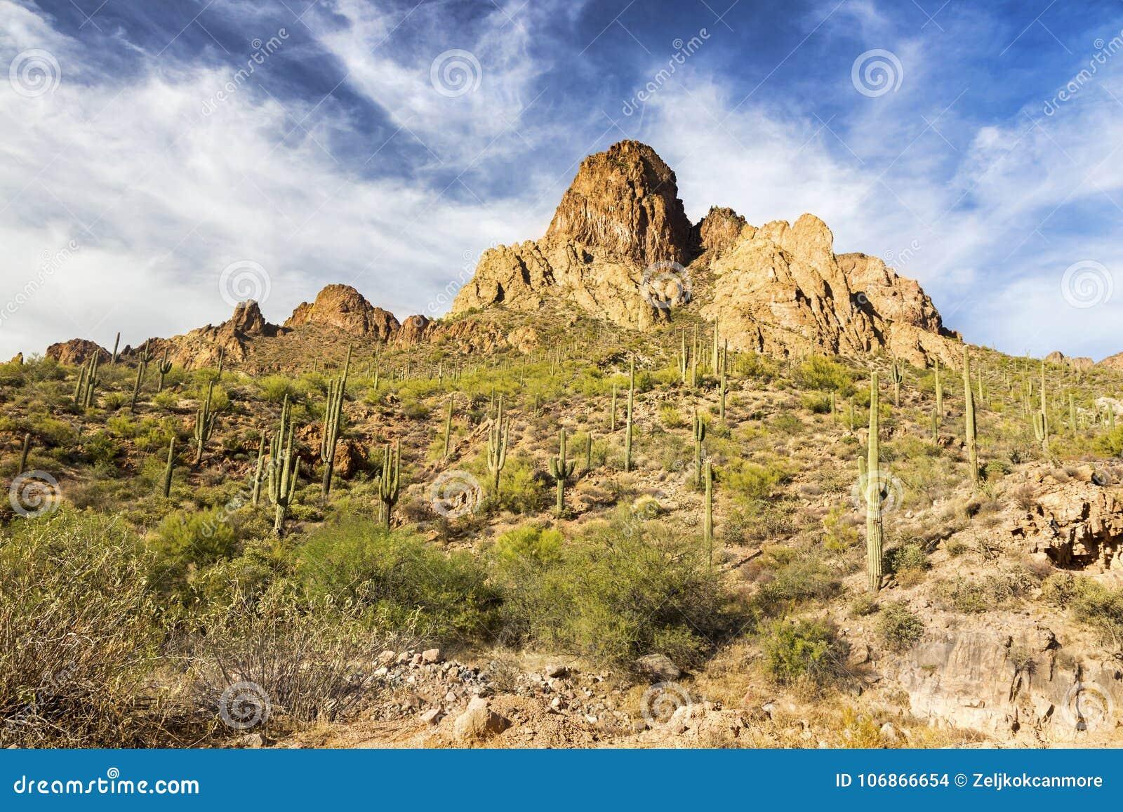 风景沙漠风景和柱仙人掌仙人掌厂亚利桑那迷信山的