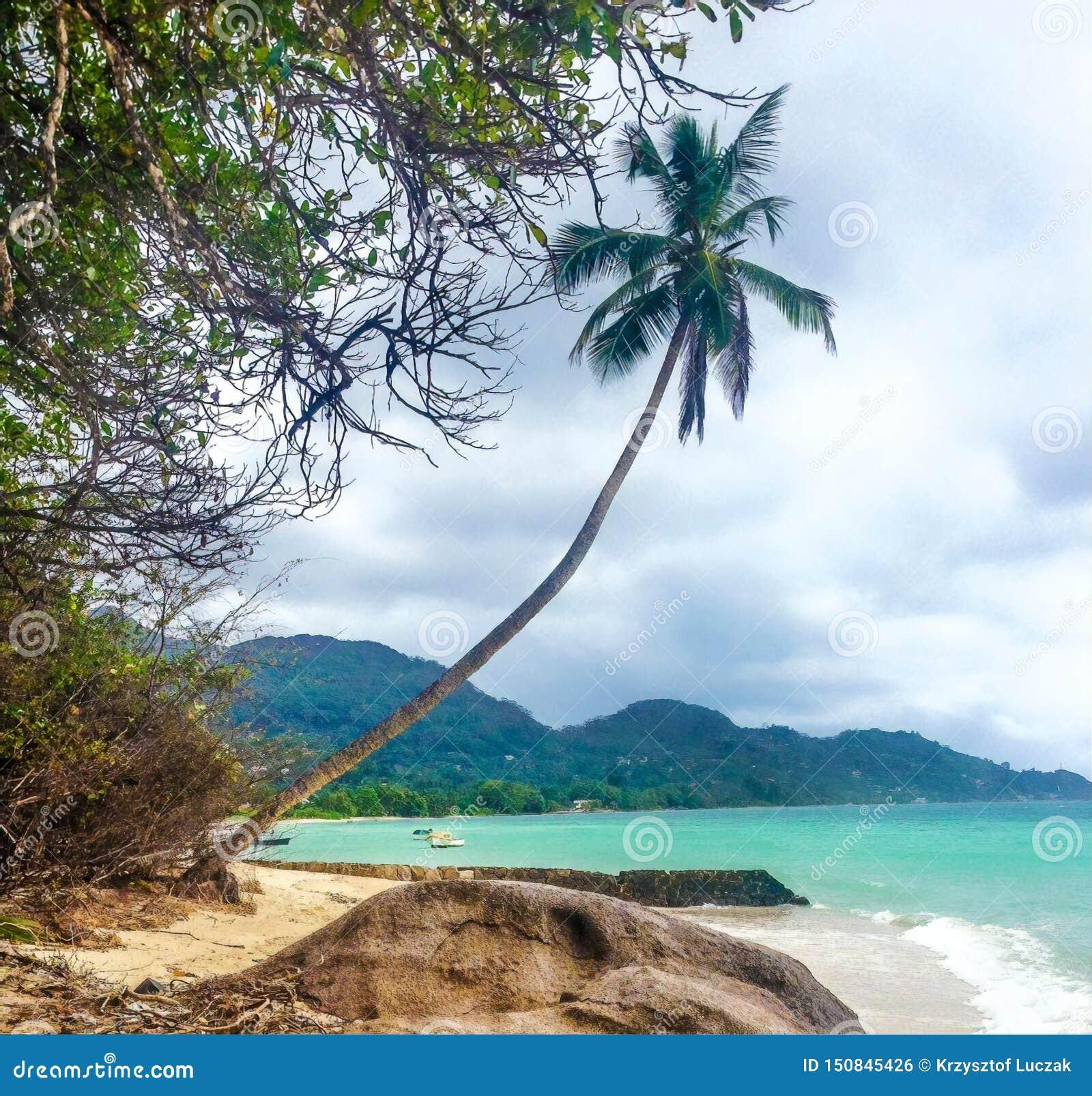 风景海滩视图,马埃海岛,塞舌尔