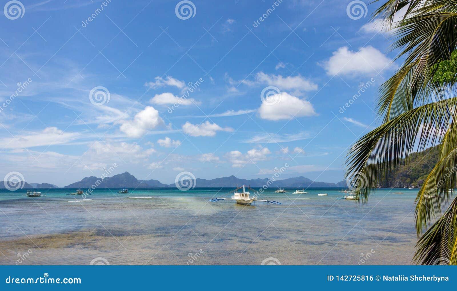 风景热带全景风景 棕榈树和白色小船在海滨在低潮期间 菲律宾,海岛巴拉旺岛,El Nido