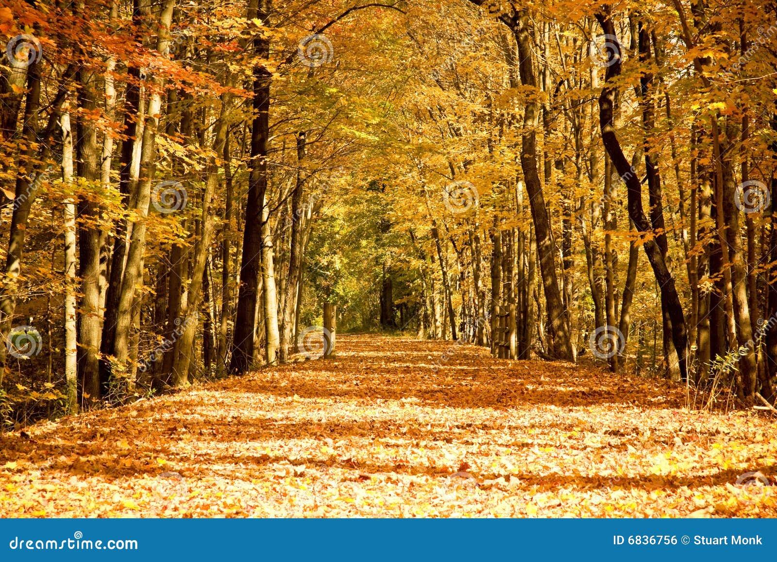 风景的秋天