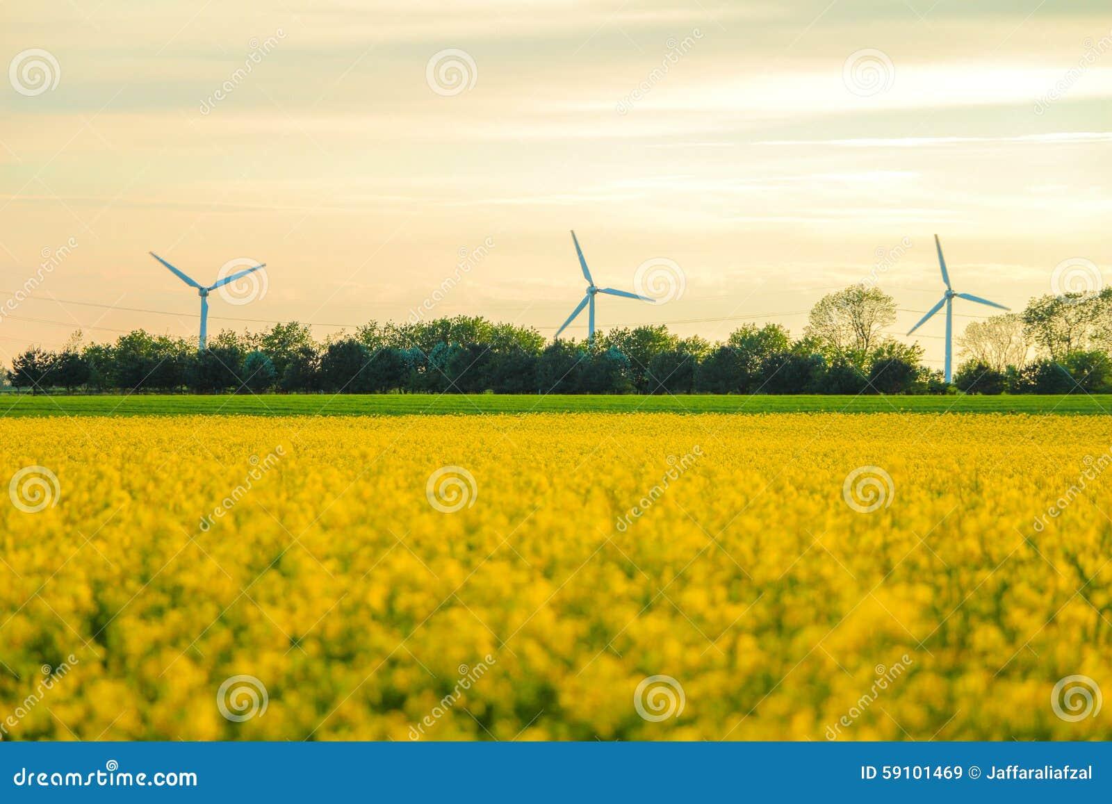 风车和油菜籽领域