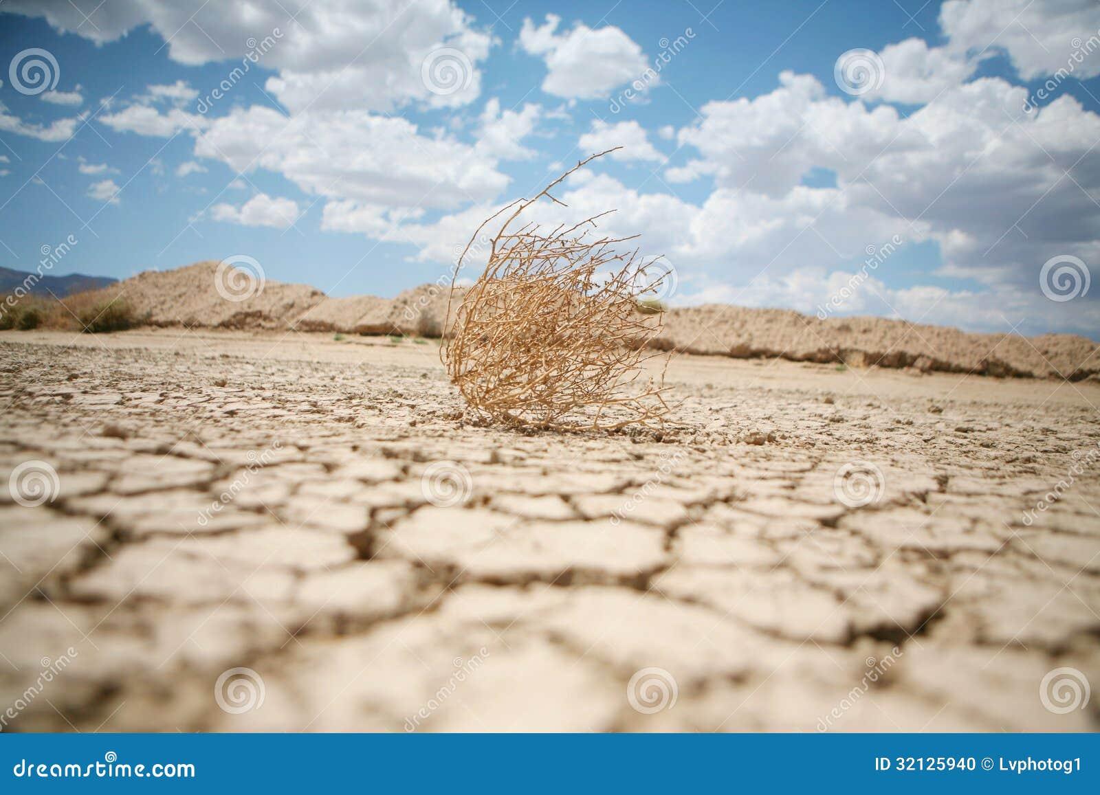 风滚草在沙漠