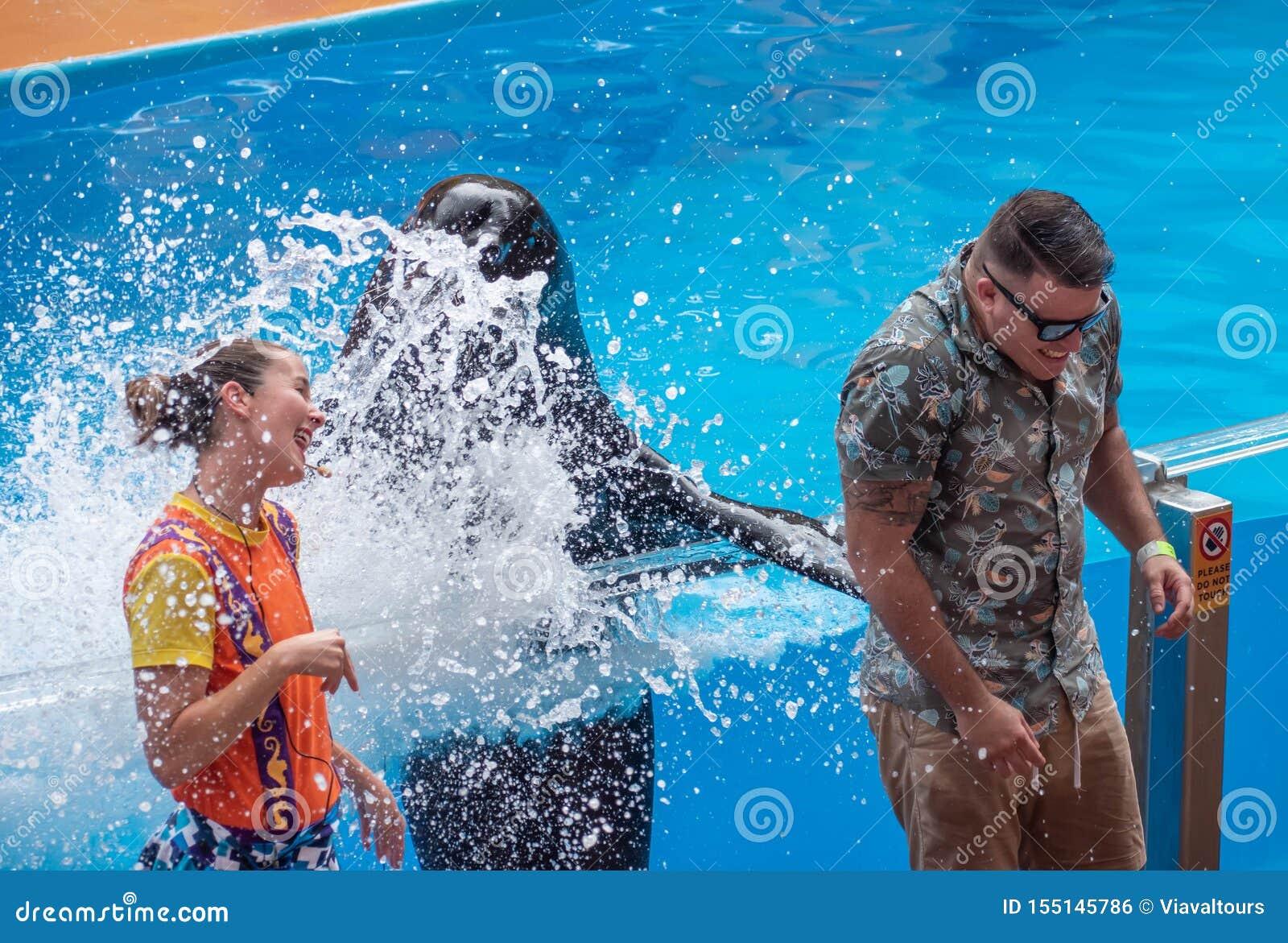 飞溅公开人的讨人喜欢的海狮与他的在海狮高展示的飞翅在Seaworld 2
