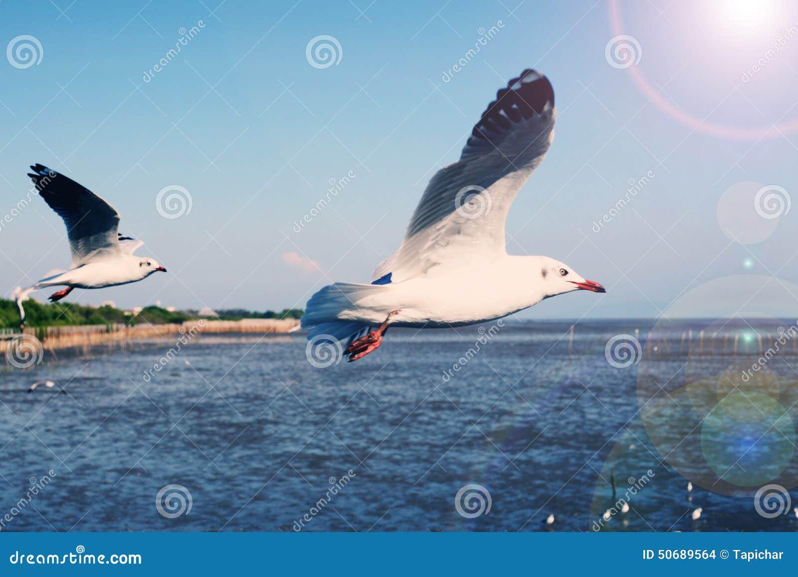 Download 飞行在蓝天的海鸥 库存照片. 图片 包括有 地图集, 海鸥, beautifuler, 蓝色, 背包, 颜色 - 50689564