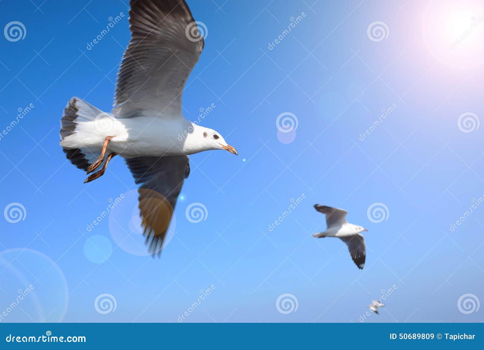 Download 飞行在蓝天的海鸥 库存图片. 图片 包括有 海鸥, 室外, beautifuler, 天气, 航空, 风景 - 50689809