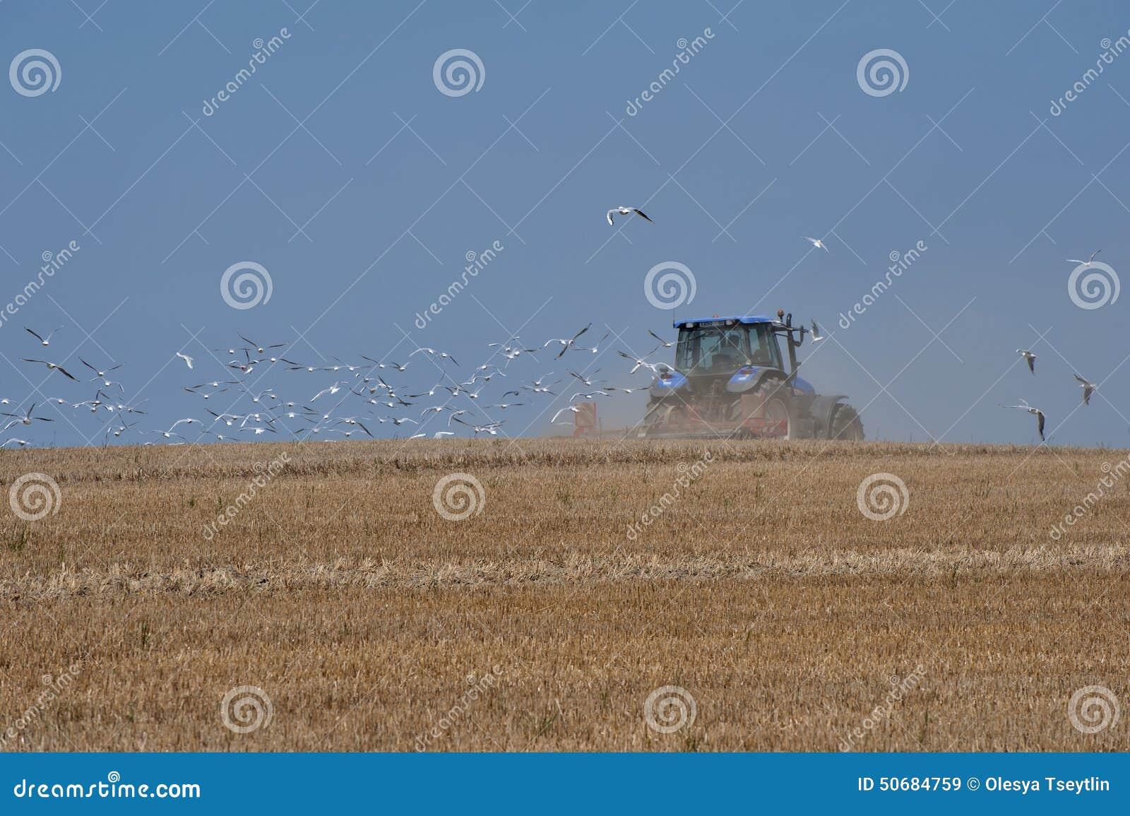 Download 飞行在他后的割晒牧草拖拉机和海鸥 库存图片. 图片 包括有 黑麦, 拖拉机, 庄稼, 鸟舍, 天空, 金子 - 50684759